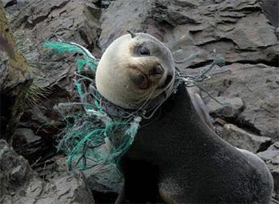 3000 à 5000 filets perdus continuent à piller la mer
