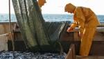 Pêche au chalut dans le Golfe du Lion, en octobre 2010 (JM.GOYHENEX/SIPA).