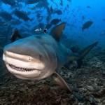 requin_200_200
