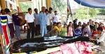 Cérémonie de culte pour un dauphin échoué avant son enterrement. Photo : CTV/CVN