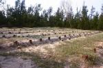 Le cimetière de baleines à Tam Hai se trouve sur une vaste aire de sable blanc. Photo : CTV/CVN