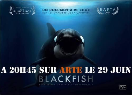 Film-Blackfish