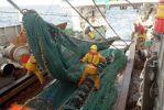 Le Parlement européen n'interdit pas le chalutage en eaux profondes. | AFP/MARCEL MOCHET