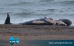 baleine-Tunisie