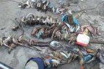 Pêche illégale - Réserve marine (Image d'illustration)
