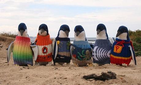 Penguin sweaters