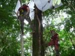 Des chercheurs en train de prélever des insectes dans la canopée.Fernando Montealegre-Zapata.