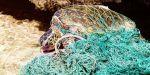 Une tortue prise au piège dans un filet de pêche. | NOAA / Wikimedia
