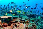 Les fonds marins près d'Hawai, dans l'océan Pacifique. | AFP/James Watt