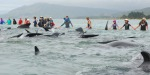 mass-stranding-NZ2