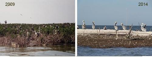Avant le déversement, l'île aux Chats s'étendait sur plusieurs acres. Une grande diversité d'oiseaux marins y trouvaientrefuge.