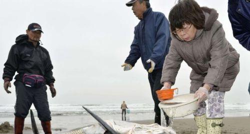 Munis de seau d'eau, certains secouristes essayaient d'empêcher la peau des dauphins de sécher.AFP/TOSHIFUMI KITAMURA
