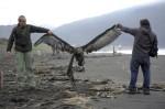 Les oiseaux ont été retrouvés morts dimanche sur la plage de Lenga, à environ 550 km au sud de Santiago. PHOTO : REUTERS