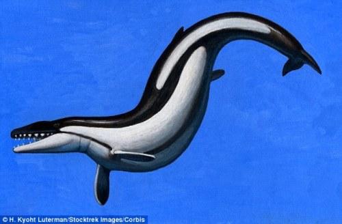 Egypt-whale-shark2