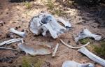 Le braconnage a fortement augmenté ces dernières années en Afrique de l'Est, avec le massacre de troupeaux entiers d'éléphants pour leur ivoire. - Ivan Lieman AFP