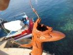 Un chien de mer, petit squale, péché à la palangre le 16 juillet 2015 par 300 m de fond dans le canyon de Cassidaigne. Le pêcheur ne connaissait pas la zone...Gérard Carrodano.