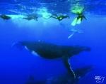 Les nageurs ne doivent pas s'approcher à moins de 30 mètres des mammifères. Photo : Mata Tohora