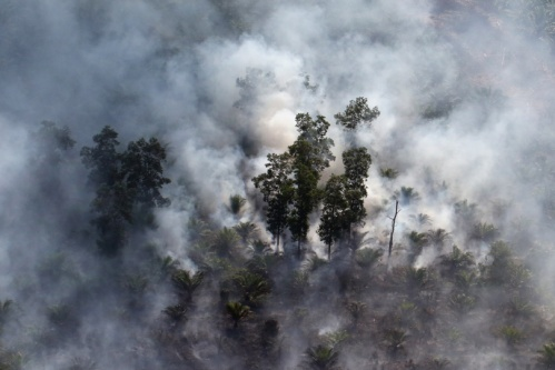 foret-en-feu-Indonesie