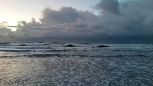 Echouage-5-cachalots-Texel-Pays-Bas2