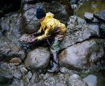 En janvier 2000, un bénévole nettoie une plage de Vendée touchée par la marée noire après l'accident de l'«Erika». JEROME BREZILLON / TENDANCE FLOUE