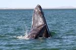 reconnaissance-visage-baleine