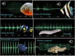 Les sons permettent de détecter et d'identifier différentes espèces de poissons