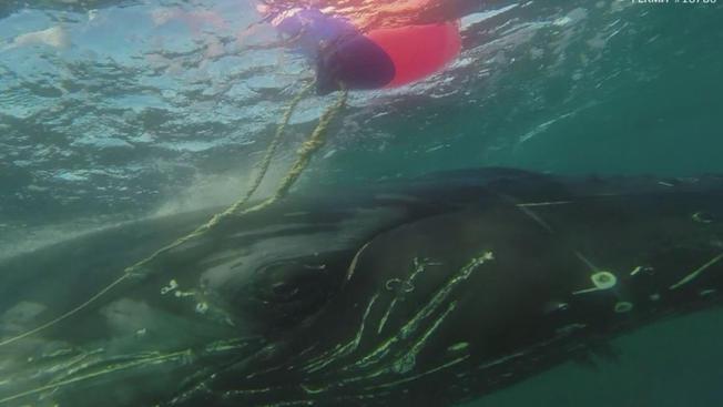 Tout sur la pêche spinningom vidéo