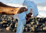 Requin-marteau lisse probable si l'on considère l'absence d'indentation