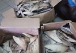 Trois cartons d'ailerons de requin interceptés. © Conservation Justice