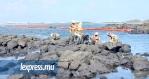 Les autorités mauriciennes ont quadrillé le secteur au Bouchon, afin de limiter les dégâts causés par le fioul répandu dans la mer.