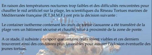 bulletin-sante-oeufs-tortue