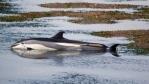 mass-stranding-dolphins-new-brunswick-canada