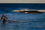 Une baleine échouée en Australie, illustration. Crédit Image : PATRICK HAMILTON / AFP