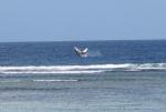 Baleine à bosse sautant hors de l'eau à Aldabra. (April Burt)