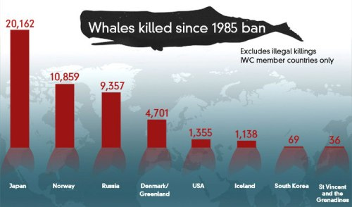 whales-killed-since-1985-da