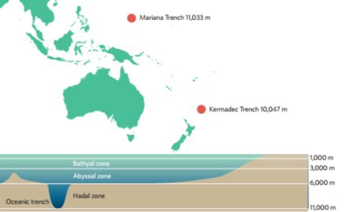 Les fosses des Mariannes et des Kermadec plongent à plus de 10 000 mètres de profondeur. Nature Ecology & Evolution