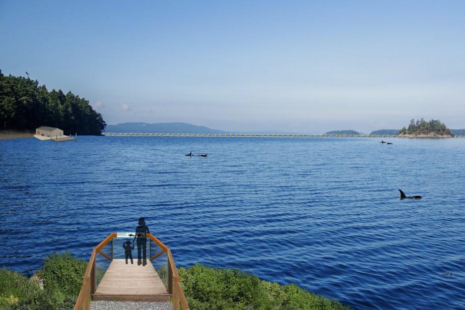 Une maison de retraite pour les dauphins en Nouvelle-Écosse ...